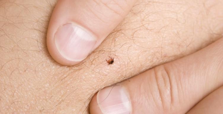 11 Signs & Symptoms of Lyme Disease