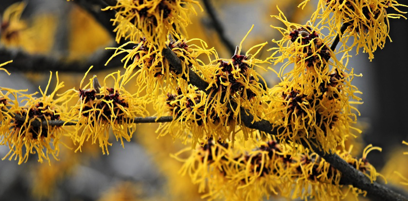 Witch hazel for sunburn: Is witch hazel good for sunburn relief?