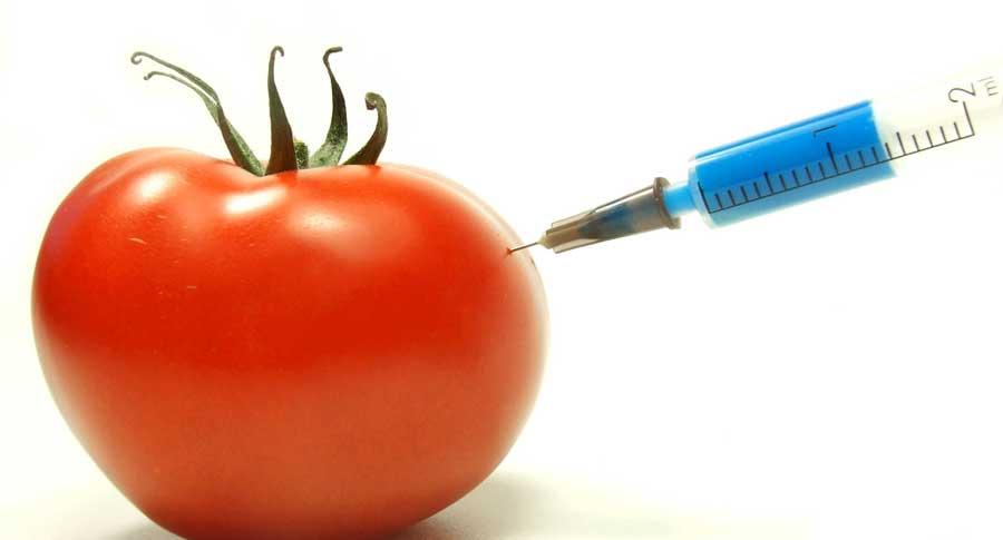 GMOs Cancer