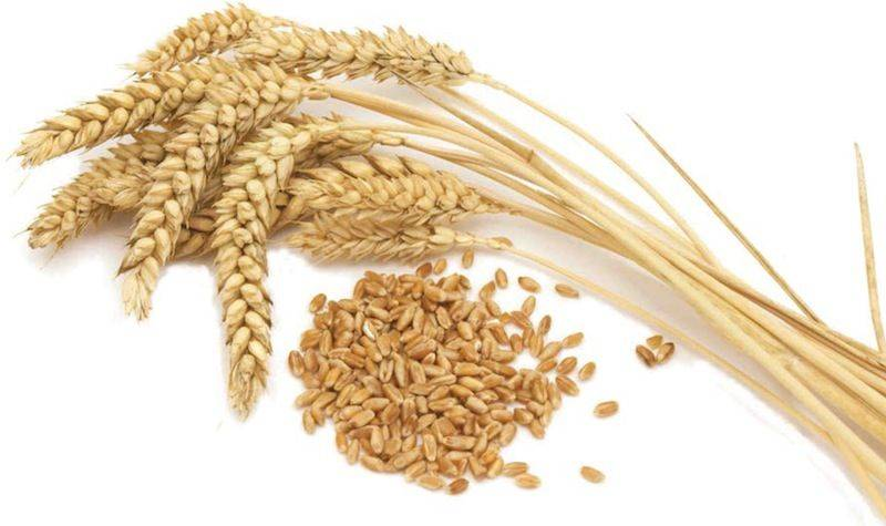 Wheat might upset your stomach
